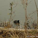 01-26-13 White Rock Lake - IMGP4342.JPG