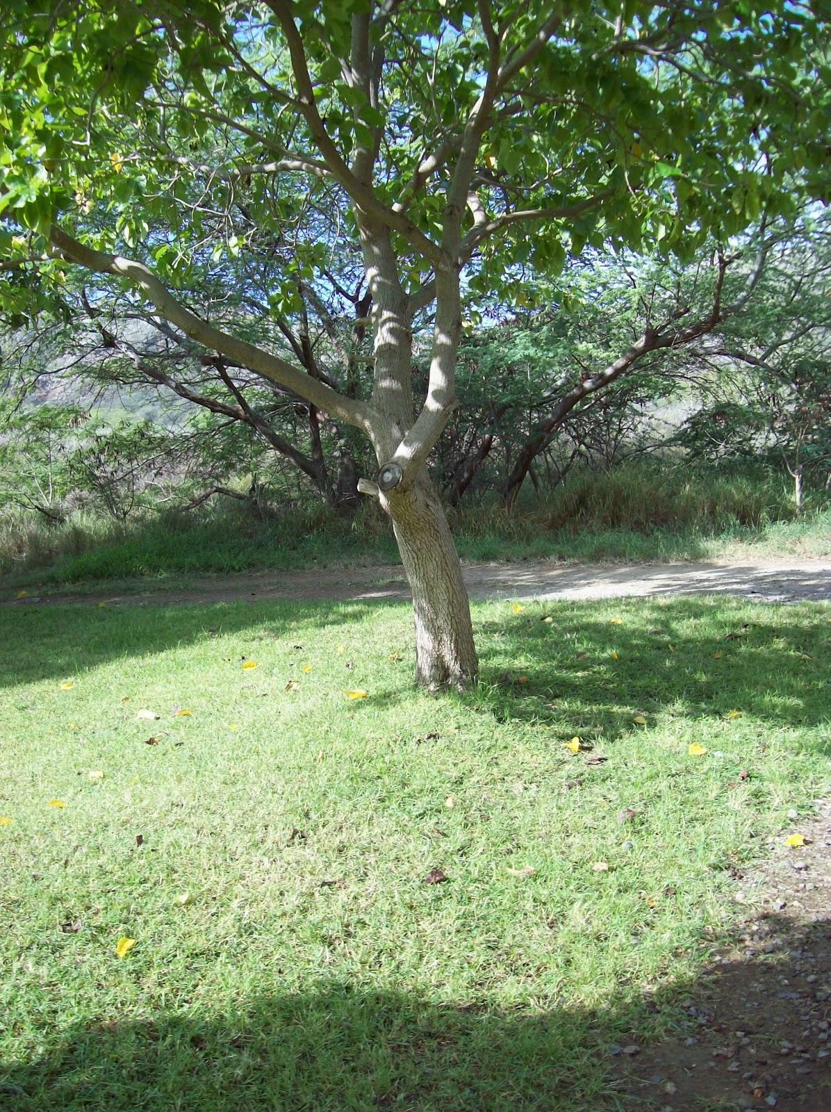 Hawaii Day 2 - 100_6575.JPG