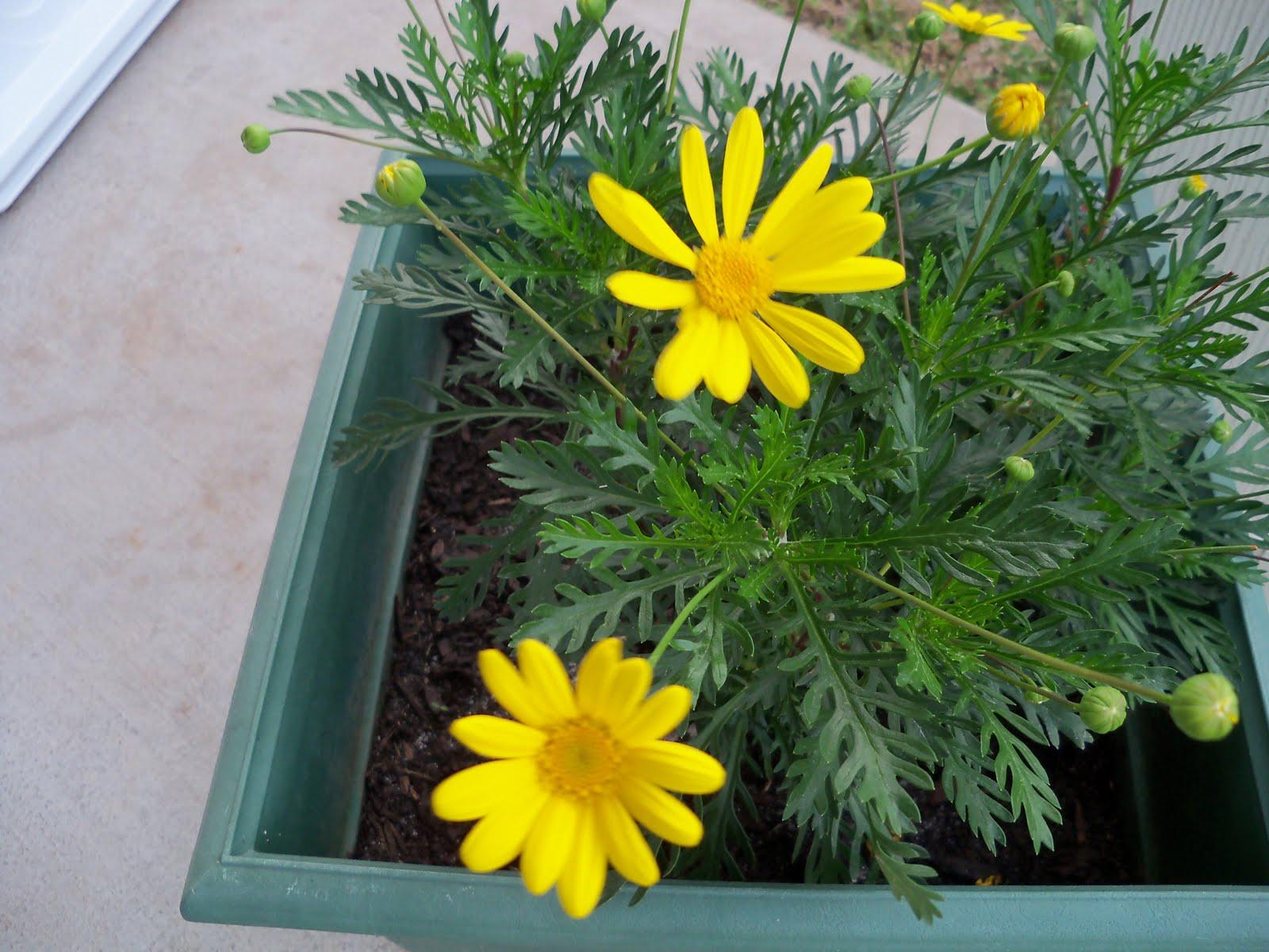 Gardening 2010 - 101_0969.JPG