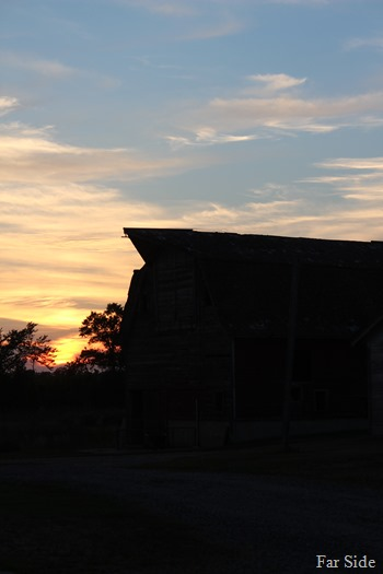 Sunset Nilsons barn