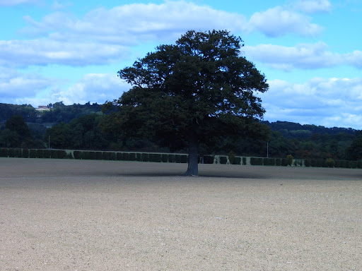 Ploughed Field with tree