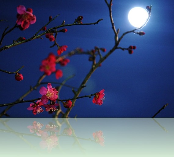 Blossom-at-Night-21