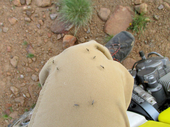 Mosquitoes attacking