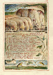 The Clod And Pebble By William Blake