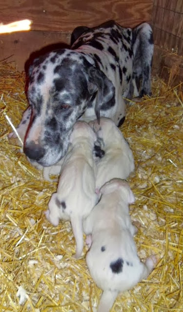 Graysee with her babies @ 6 days