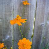 Gardening 2011 - 100_9147.JPG