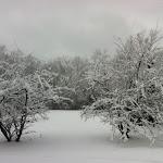 JimDavis-Magnolias - Jim Davis, 2012.jpg