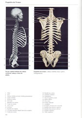 182 Esqueleto do Tronco