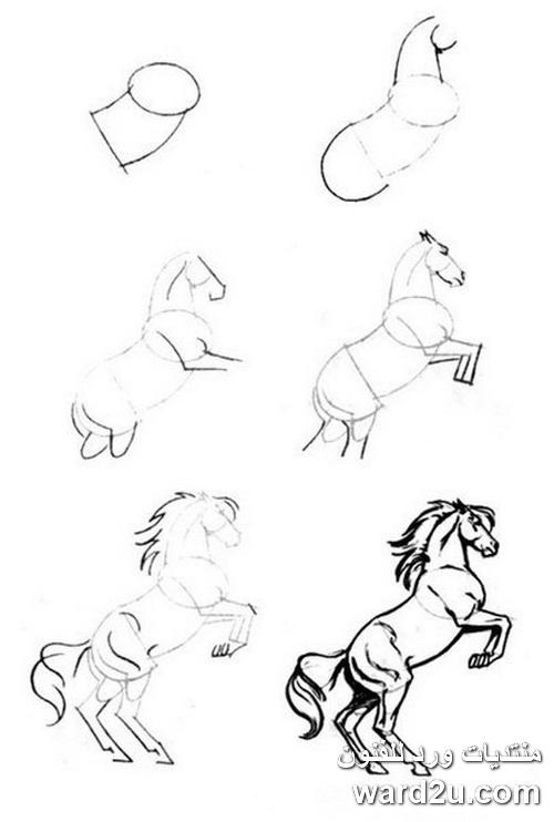 اسكتشات رسم حصان فى حركات مختلفه