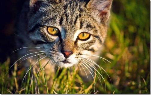 22 fotos de gats (24)