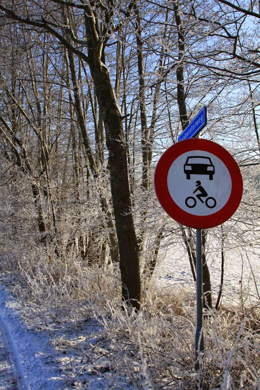 Winter - Winter-024.jpg
