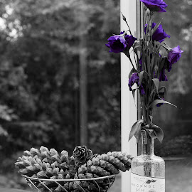 Purple Flowers by Jamie Ledwith - Digital Art Things ( purple, black and white, gin, pine, bottle, flowers, cones )