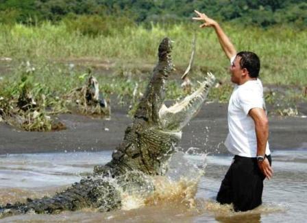 Questões e Fatos sobre Crocodilianos gigantes: Transferência de debate da comunidade Conflitos Selvagens.  - Página 2 123