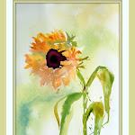 sunflowerforpaige.jpg