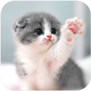 Cat Wallpapers Android Apps on Google Play