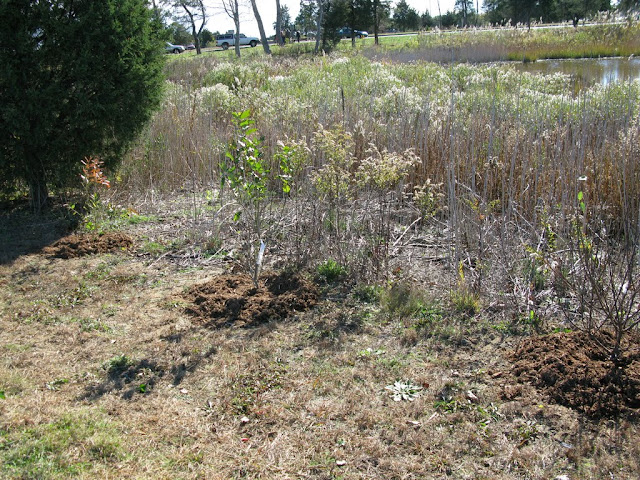Hammo Planting - Shannon Schiesser - IMG_4960.JPG