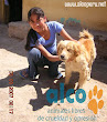 Asistencia Huancavelica por terremoto 2007 (10)