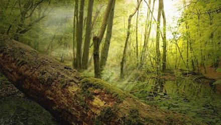 Πώς επηρεάζουν τα νεκρά δέντρα τον κύκλο του άνθρακα της Γης