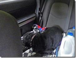 Bubba sleeping through the ride