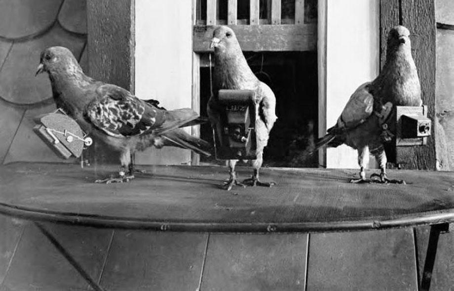 neubronner-pigeon-photography-15