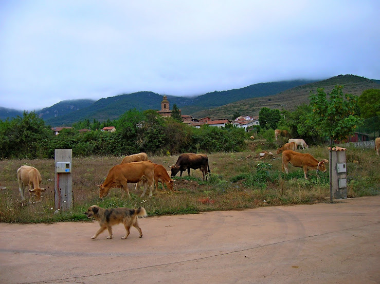 Un paseo por las nubes de Los Pirineos.. Los%2BPirineos%2B2014%2B058