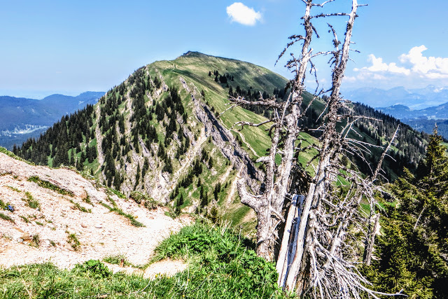 Vom Hochgrat Blick über den Abstiegsweg auf das Rindalphorn alter Baum Nagelfluhkette