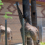 Houston Zoo - 116_8543.JPG