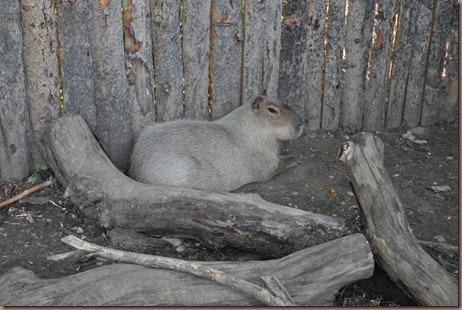 08-17-16 Boise Zoo 04