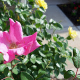 Gardening 2011 - 100_7504.JPG