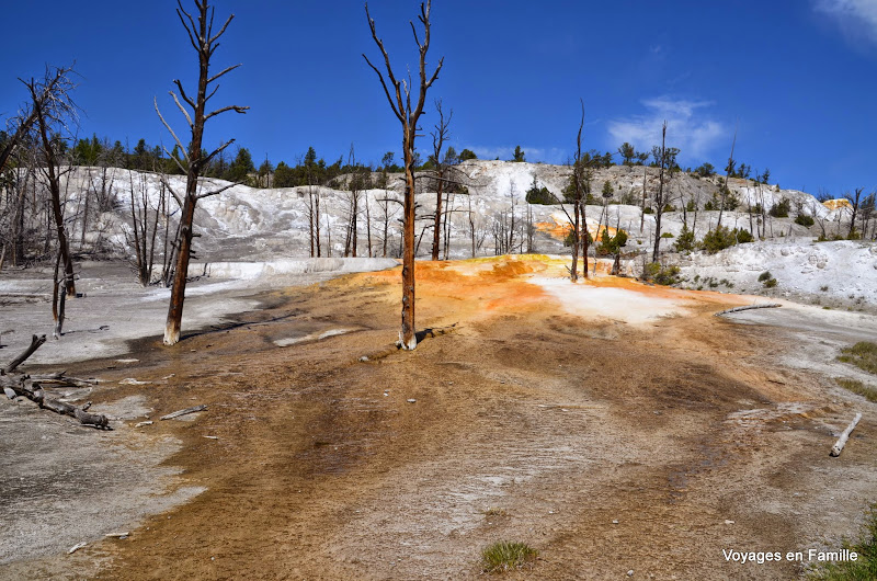 yellowstone upper terraces