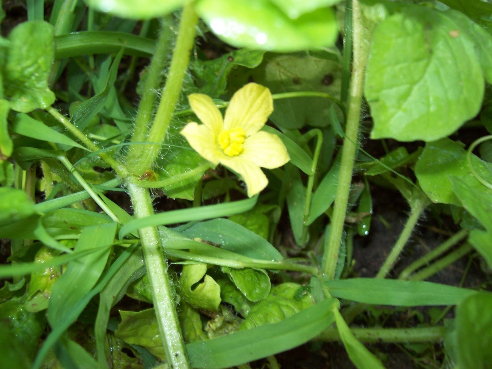 Gardening 2009 - 101_4589.JPG