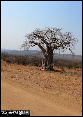 Balade australe... 11 jours en Namibie IMG_0446