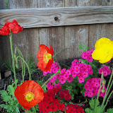 Gardening 2011 - 100_7099.JPG