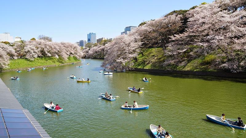 千鳥ヶ淵 桜 写真14