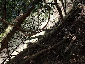 倒木の下をトラバース
