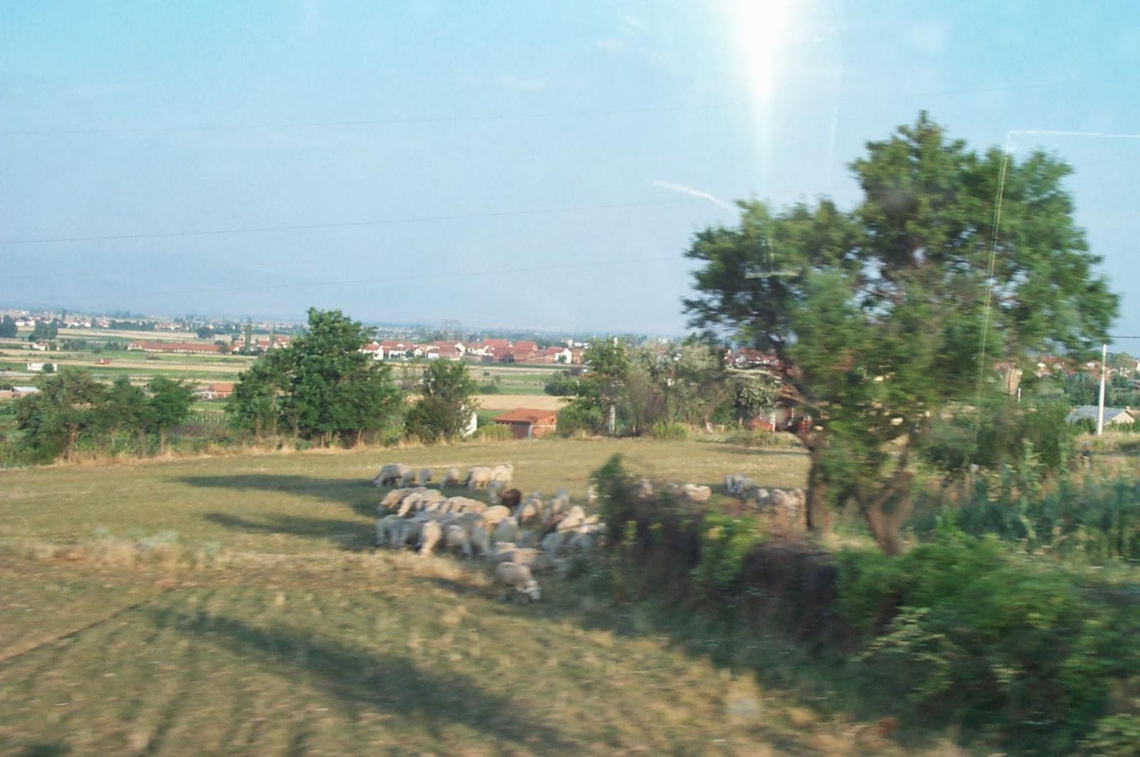 Makedonija - DCP_1576.JPG