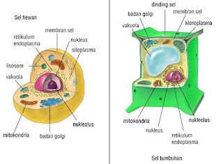 Struktur Dan Fungsi Organel Sel Hewan dan Tumbuhan