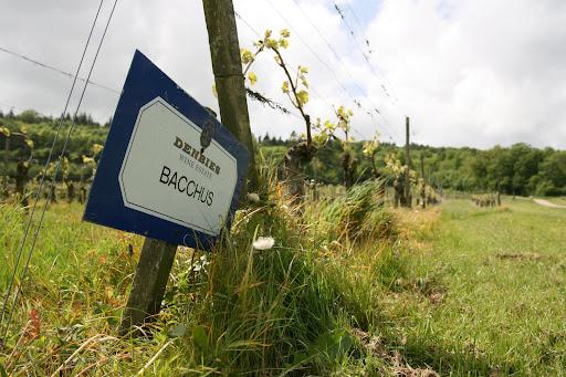 0905 064 Denbies Wine Estate, Surrey, England