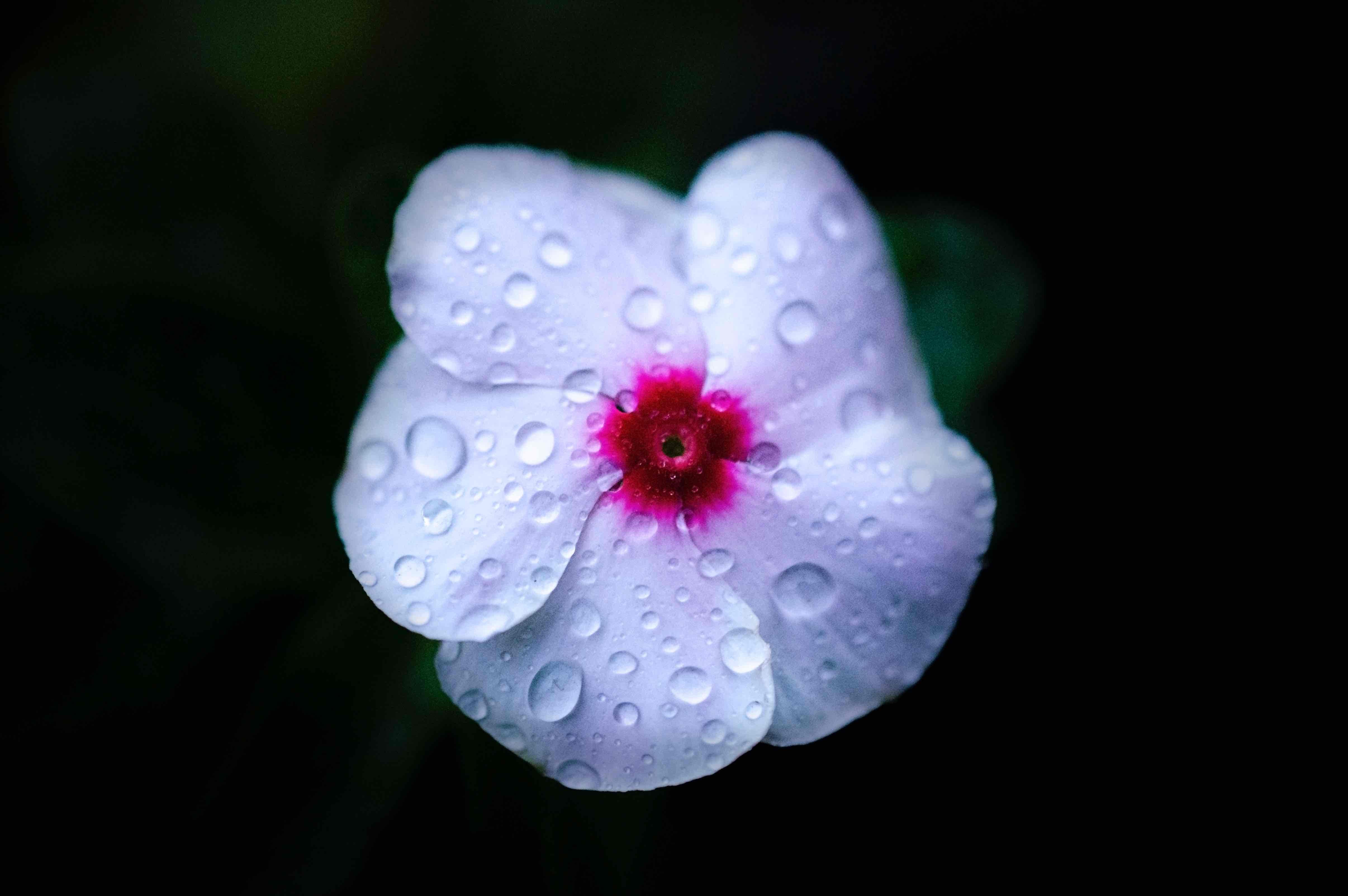 Imagenes muy lindas de flores4