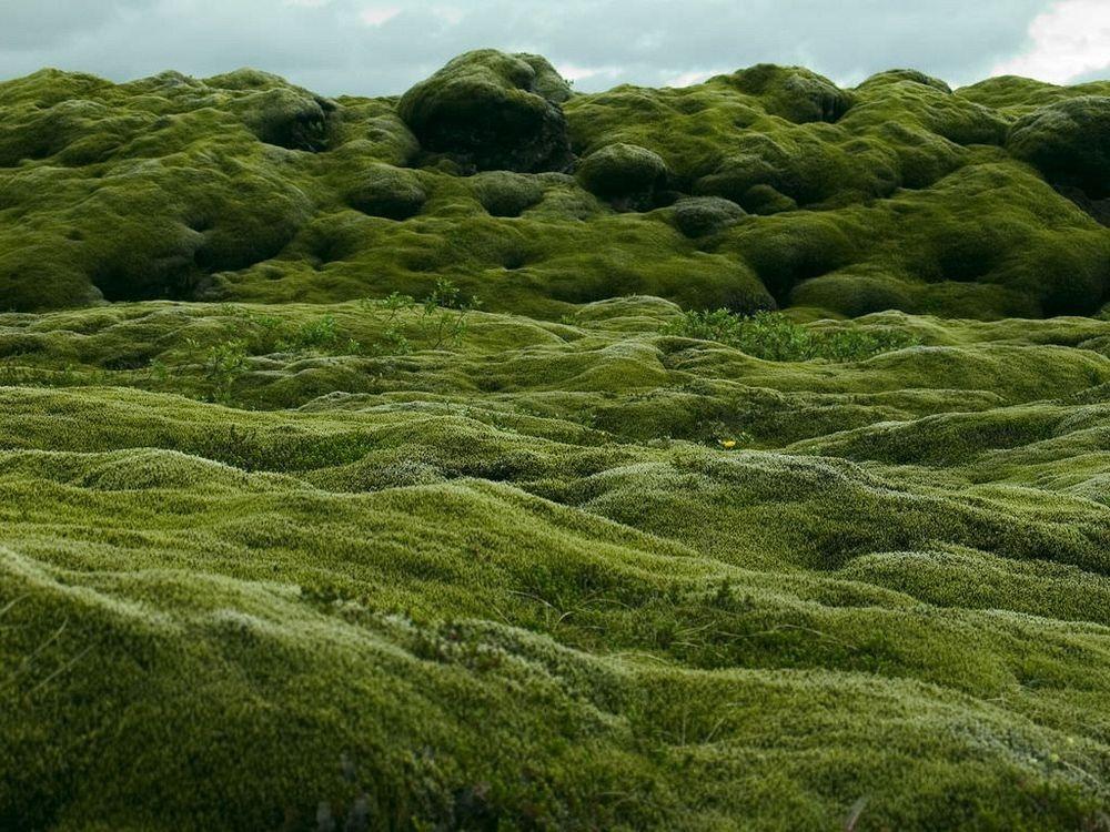mossy-lava-fields-iceland-1