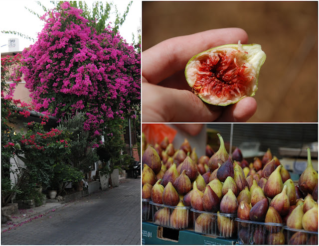 Bougainvillea,  figs growing wild, figs
