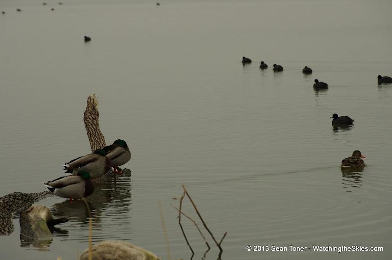 01-26-13 White Rock Lake - IMGP4323.JPG