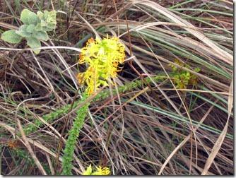 flores-silvestres-carrancas-1-