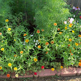 Gardening 2010, Part Two - 101_3277.JPG