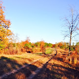 Anderson Creek Hunting Habitat - DeerHabitat007.JPG
