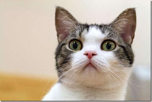 fotos de gatos (29)
