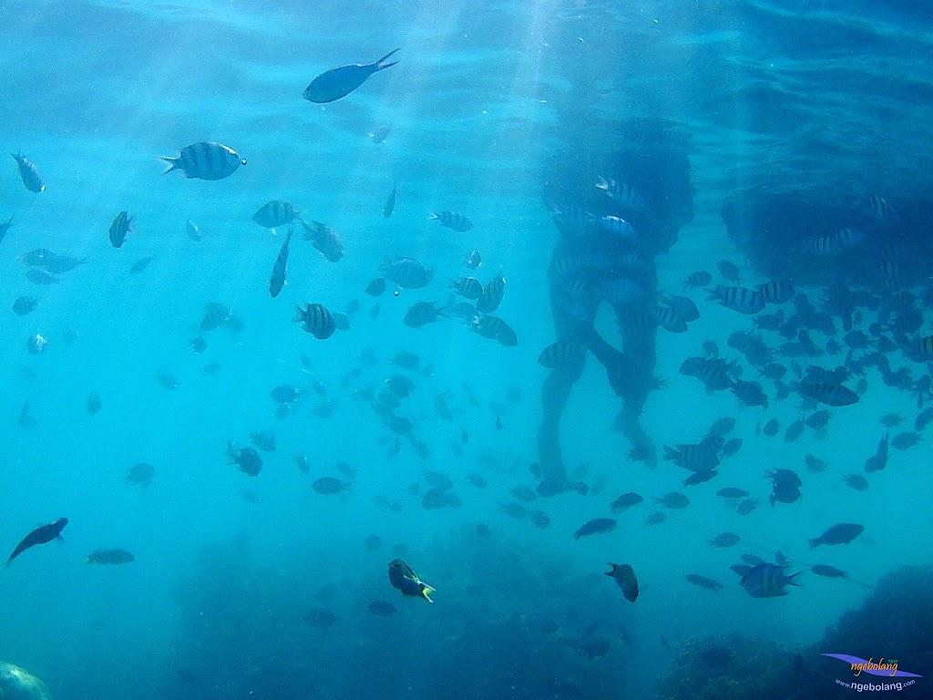 family trip pulau harapan, 1-2 agustus 2015 gopro 43
