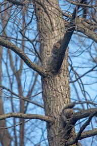 Sleeping Squirrels