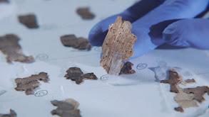 Dead Sea Scroll Detectives thumbnail