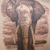 Nathan's Elephant